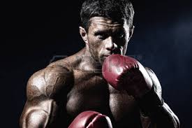 boxer dog in boxing gloves boxer stock photos u0026 pictures royalty free boxer images and stock