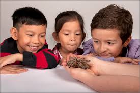 spiders alive extended through sunday january 6