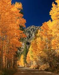fall colors conway summit mountain pass mono county