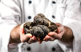 where to go truffle hunting in britain hand luggage only