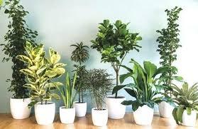 easy flowers to grow indoors flowering indoor trees green thumb the easiest indoor plants to grow