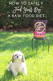 raw dog food diet how to safely feed your dog a raw diet is it