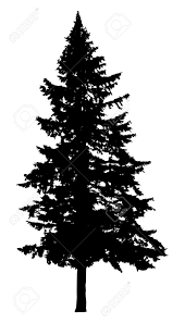 pine tree silhouette isolated on white background royalty free
