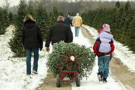 home ri christmas tree growers association
