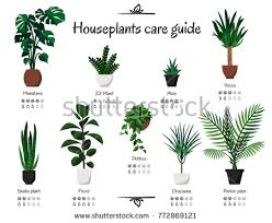 houseplant stock images royalty free images u0026 vectors shutterstock