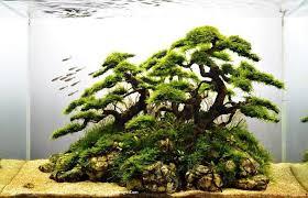 Java Moss Aquascape Driftwood And Java Moss Faux Bonsai Aquaria And Aquascapes