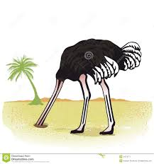 ostrich stock illustrations u2013 2 791 ostrich stock illustrations