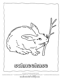 10 3 animals color images coloring pages