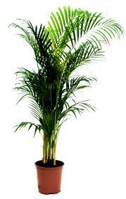 plante d駱olluante chambre les plantes dépolluantes sortir du chaos et de l illusion