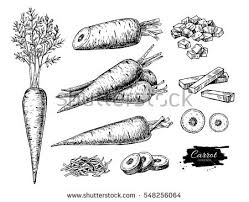 slice of vegetable vector icons download free vector art stock
