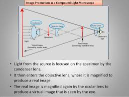 a light microscope image is formed by introduction to the light microscope