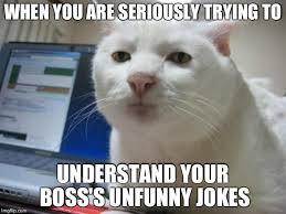 Cat Meme Maker - serious cat meme generator imgflip