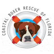 rescue a boxer dog coastal boxer rescue petfinder com