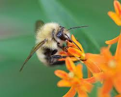 bird attracting native plants attracting birds bees and butterflies u2013 bowman u0027s hill wildflower