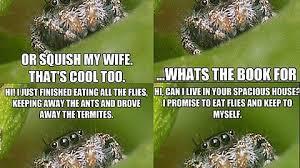 Spider Bro Meme - misunderstood spider bro imgur