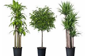 grow lights for indoor plants advanced platinum series p900 led