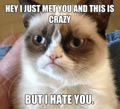 Hipster Cat Meme - what does grumpy cat think of hamilton the hipster cat quora