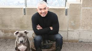 how to train dog to stop barking cesar millan gives us some of his most surprising u0026 effective dog