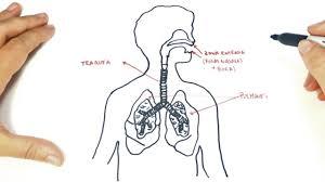 human respiratory sestem of 10th class hd images life processes