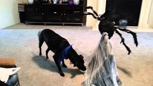 dog costumes spirit halloween halloween jumping spider youtube