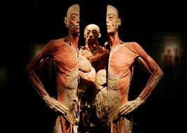 What Is Human Anatomy And Physiology Facts And Information About The Human Body