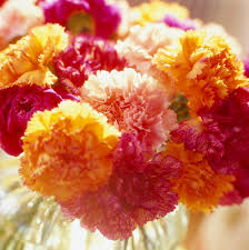 50 best types of flowers u2013 pretty pictures of garden flowers