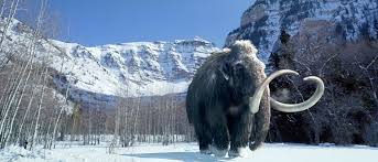 jawdropping evidence u201cwoolly mammoths u201d exist