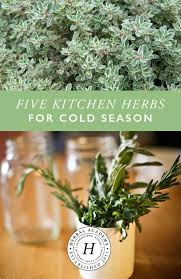 Kitchen Herb by Five Kitchen Herbs For Cold Season U2013 Herbal Academy