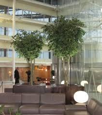 ascott ltd for top quality artificial trees for interior design