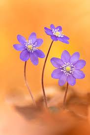 2211 best flowers breathtaking images on pinterest flowers