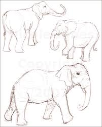 elephant sketches by nrwick on deviantart