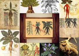 Occult Home Decor Frater Setnakh Ritual Mandrake Print Witch House Decor