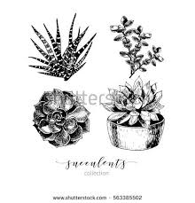 succulent plant stock images royalty free images u0026 vectors