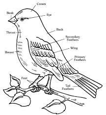 17 best images of parts of a bird worksheet birds worksheet to