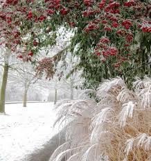 48 best seasonality images on grasses ornamental