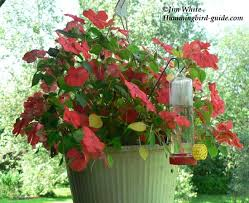 hummingbird flower garden all the resources to succeed
