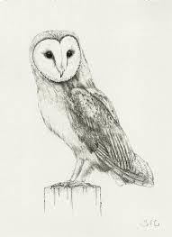 The Owl Barn Gift Collection Barn Owl Drawing Print 9 00 Via Etsy Drawings Pinterest