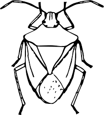 clipart stink bug