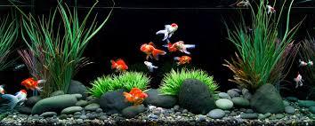 aquarium decoration ideas freshwater cuisine ocean decor for bedroom fish aquarium design ideas