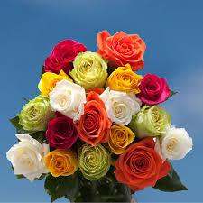 global roses best roses global