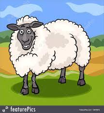 illustration of sheep farm animal cartoon