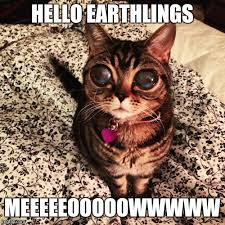 Cat Alien Meme - alien cat poosh latest memes imgflip