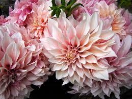 35 best flowers light colors 2016 images on pinterest light