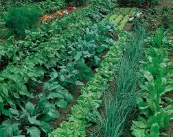 large vegetable garden layout plans cher shots something to