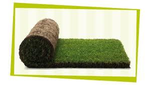Super Rolão de grama – Floragem Grama #NY55