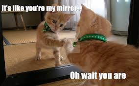 Mirror Meme - mirror cat meme by floofykitteh13 on deviantart