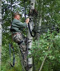 whitetail deer picking the tree for your stand