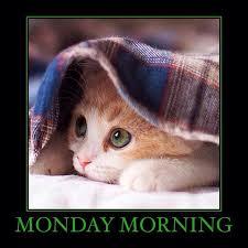 Mondays Meme - 1 year of single meanwhile on monday morning monday mondays