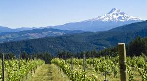 Valley Oregon Gling Mixed With Wine In Oregon S Willamette Valley Gling