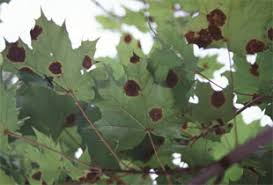 Plant Disease Diagnosis - arbor care tree service services